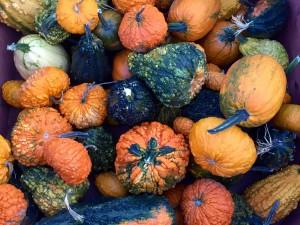 Harvest at Apple Land Station.