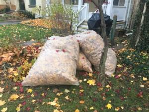 Londoner bags leaves in preparation of pickup